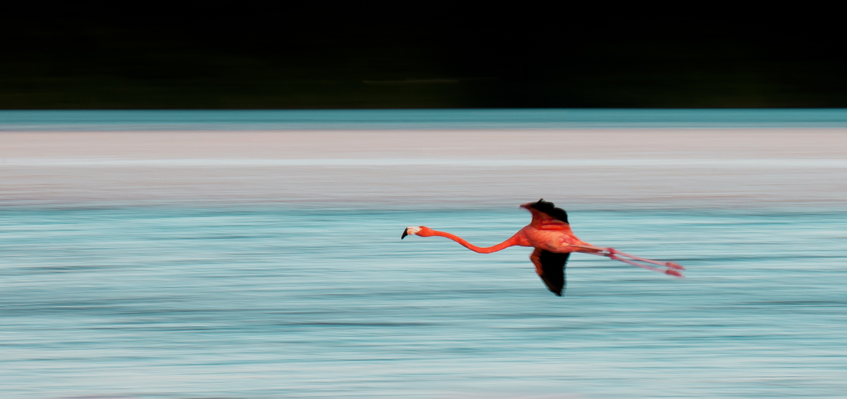 Alejandro Prieto Photography